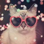 Dia do Gato: Parabenize seu Felino