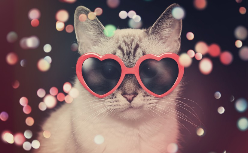 Feliz dia do gato