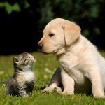 Dia do Amigo: Um Dia Dedicado à Amizade