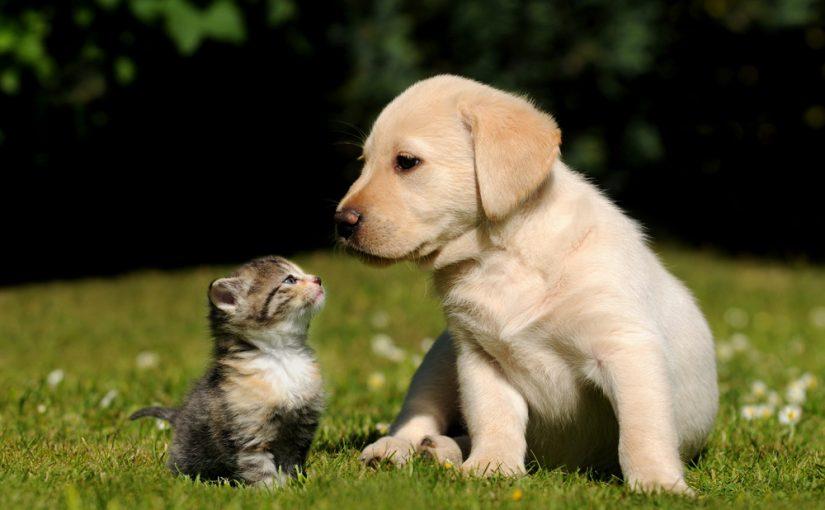 Dia do Amigo: Um Dia Dedicado a Amizade