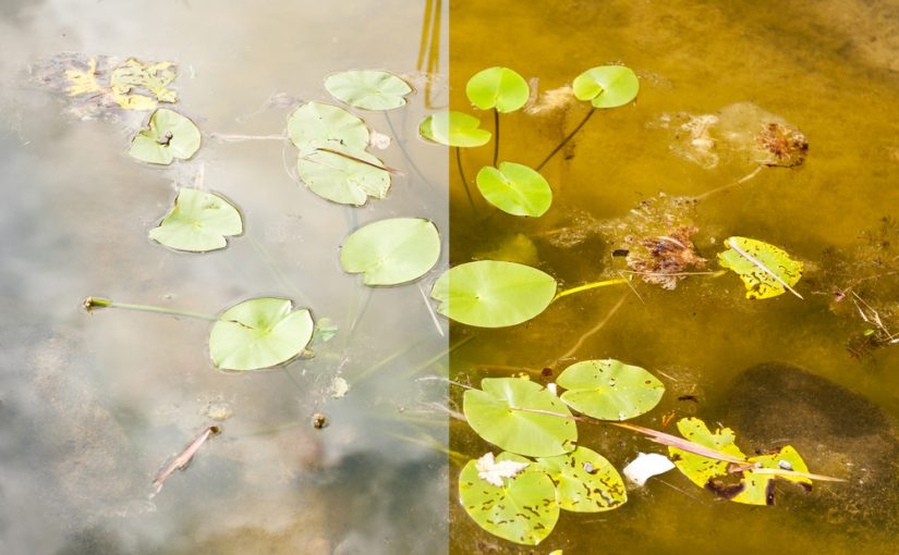 Filtro Polarizador: Deixe suas Fotos mais Naturais