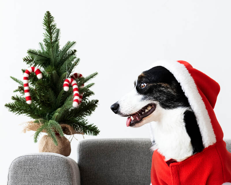 Como fazer uma decoração de natal simples e barata?