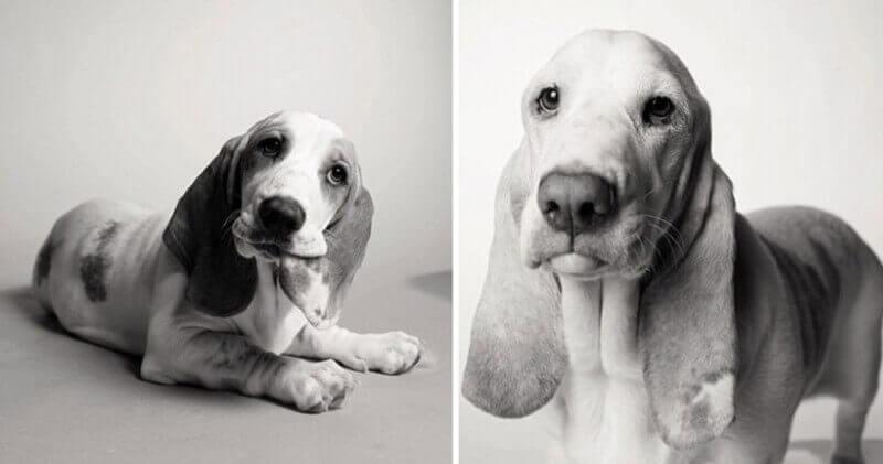 Fotografias mostram como os cães envelhecem