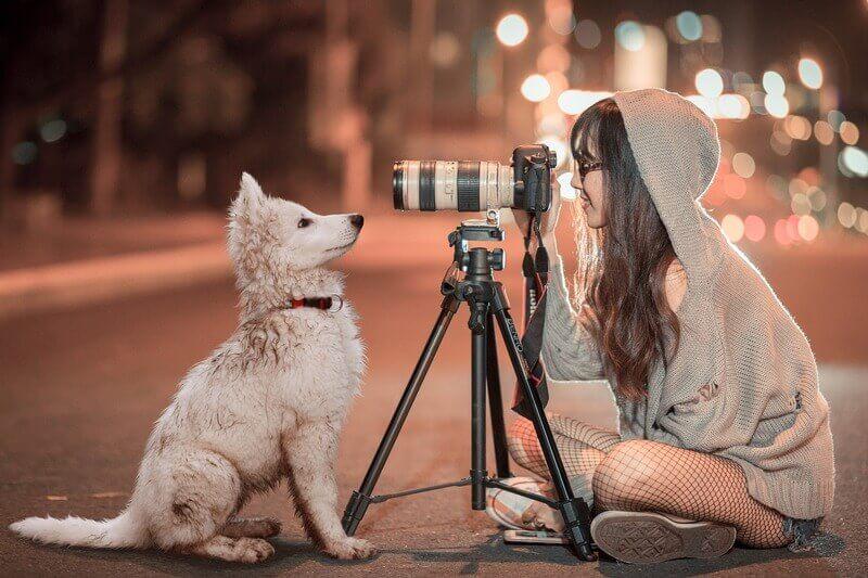 Como tirar foto de cachorro com 7 dicas!